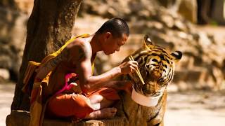 Основное отличие человека от животного и животоного от человека.
