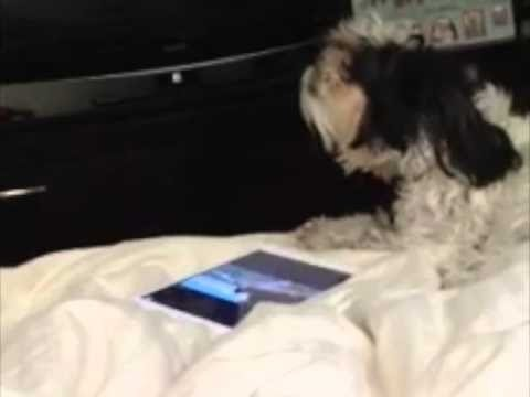 funny-dog-video!-sweet-dog-singing-to-our-music!