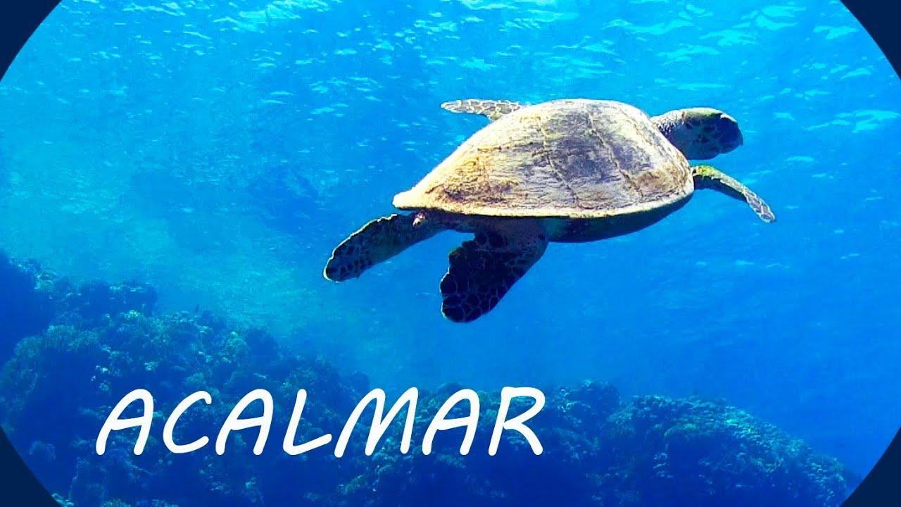 Música Relaxante E Fundo Do Mar Acalmar A Mente Youtube