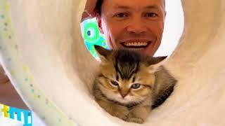 Котята Управляют жизнью Целый день от Макс и Катя