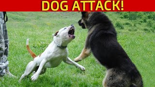 Large German Shepherd attacks Pitbull at Dog Park (Dog Park attack Injury!) Who's fault?