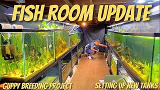 NEW GUPPY FISH BREEDING PROJECT + FISH ROOM UPDATE