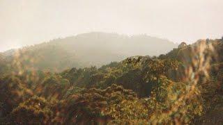今まで訪れた聖地の画像に、大好きな歌「evergreen」を重ねました☆ 緑と...