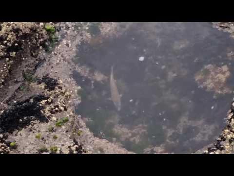 Muriwai Rock Fishing