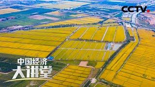 《中国经济大讲堂》 20201220 科学育种如何让我们吃得更好?  CCTV财经 - YouTube