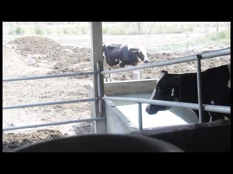 """""""พิทักษ์ฟาร์ม"""" ฟาร์มโคนมตัวอย่างในโครงการ DDP"""