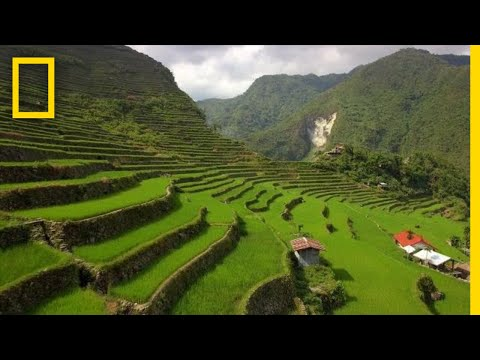 Soar Over the Lush Rice Terraces of the Philippines | Nation