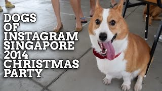 Dogs Of Instagram Singapore 2014 Christmas Party