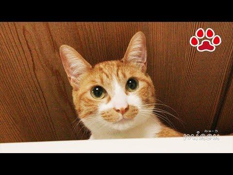 気ままな猫達【瀬戸の猫部屋日記】Cats do whatever they want