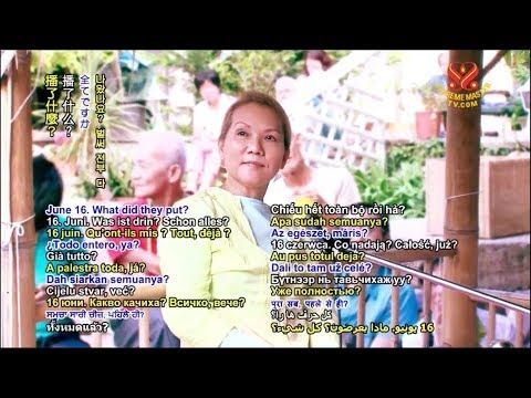 Supreme Master Television Live Stream - 2017-12-17