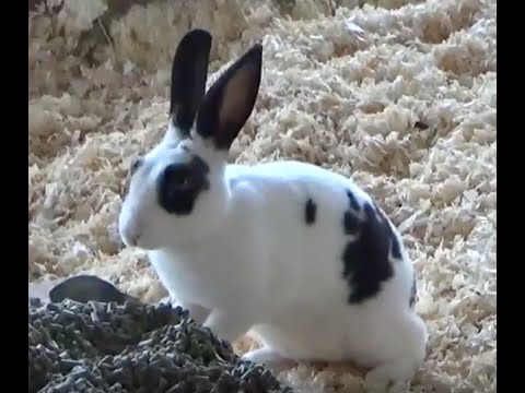 CUTE BUNNY RABBIT COUNT  KIDS Count 60 Rabbits  YouTube