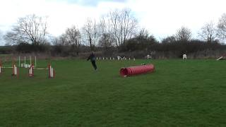 Moo Dog Agility Training Leicester