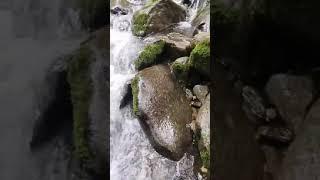 가평어비계곡, 1급수 물