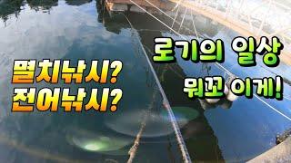 [통영로기] 145회 멸치낚시에 전어 들이... 뭐꼬 …