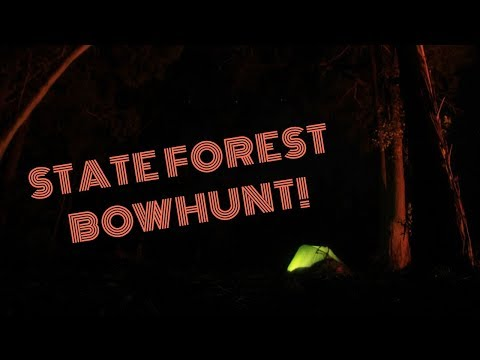 STATE FOREST BOWHUNTING