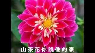 鄧麗君 - 山茶花 - Teresa Teng - Camellia Flower