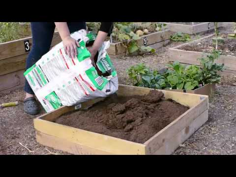 How Do I Start a Small Vegetable Garden in Texas?