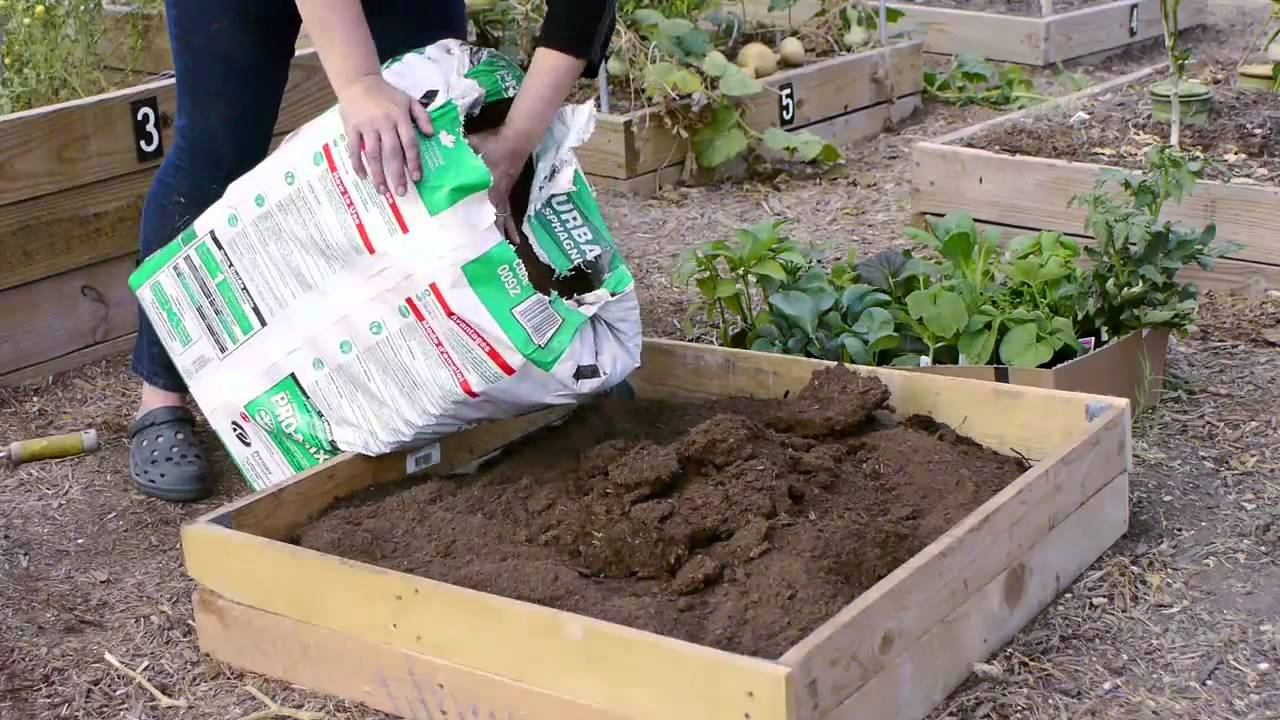 how to start a small garden