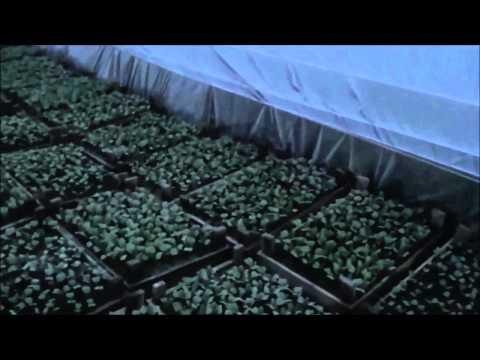 АТ32 Простой способ зарабатывать на Калифорнийских червях и попутно вырастить овощи на продажу