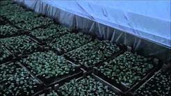 Allbiz ▻ крупнейший b2b рынок украины, договорные цены. Предложения о продаже и покупке семян лимонника не только в украине, но и во всем мире!
