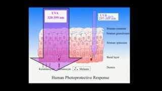 how to use UV light for vitamin D synthesis 2