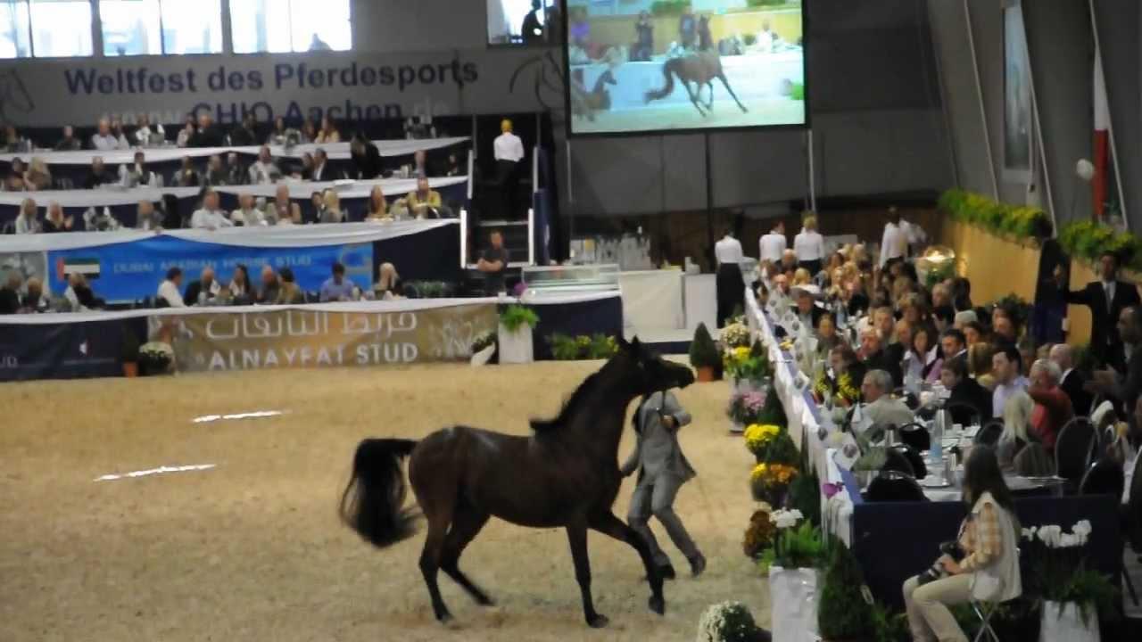 World Equestrian Festival Vollblutaraber Chio Aachen