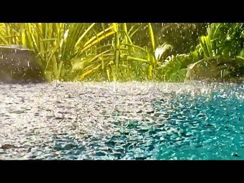 Thunder Sounds with Rain on Pond | Sleep, Study, Focus with Rainstorm White Noise