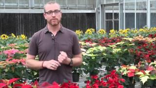 Video Dr. Jackson - HS 201 - Introduction to Horticulture download MP3, 3GP, MP4, WEBM, AVI, FLV April 2018