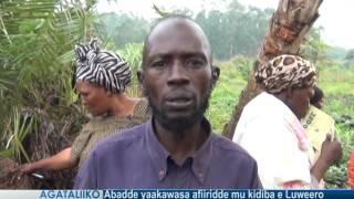Abadde yaakawasa afiiridde mu kidiba e Luweero thumbnail