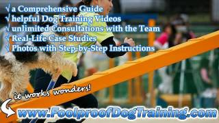 Canine Obedience Training Villa Park - Canine Training