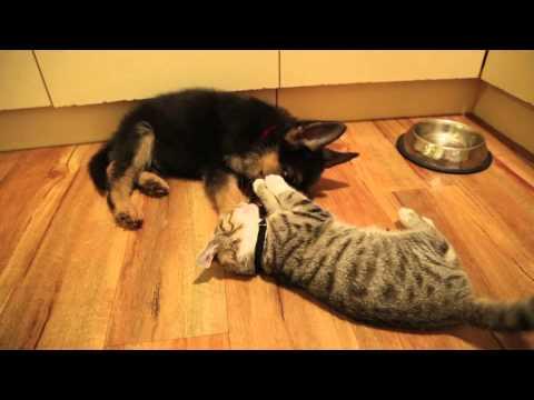 Kitten and Puppy Best Friends