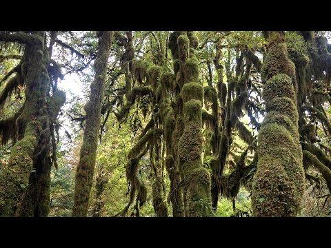 Hoh Rainforest, Olympic NP, Washington, USA in 4K (Ultra HD)