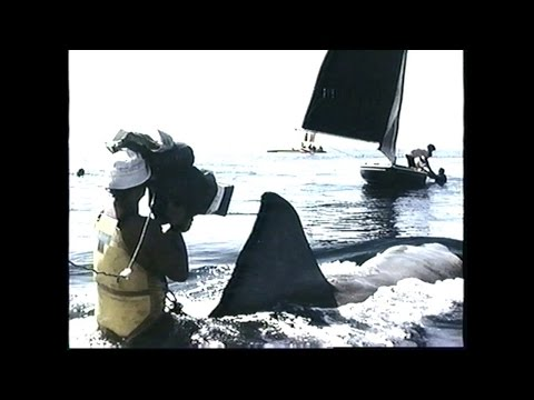 Jaws 21978 Home VideoDVD