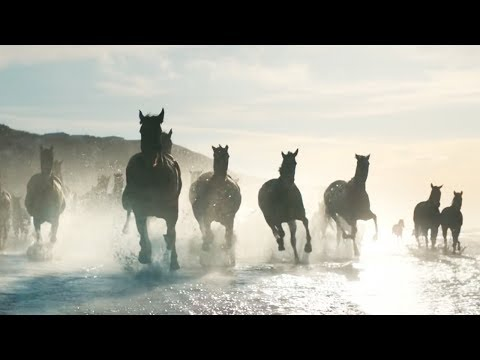 The Running of the Horses - Lloyds Bank