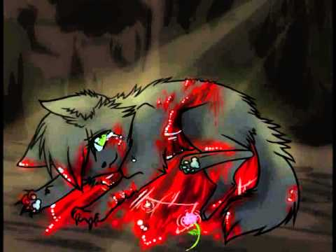 Warrior Cats Hollyleaf S Tribute YouTube