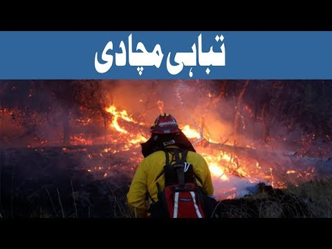 California Ki Aag Nay Tabahi Macha Di   Headlines 12 PM   15 October 2017