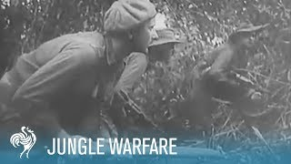 Australians Fight Japanese in Jungle