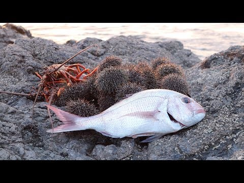 East Coast NZ Night Fishing Snapper & Kina Part 1