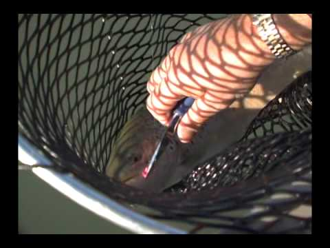 How to catch big Trout on the Niagara River