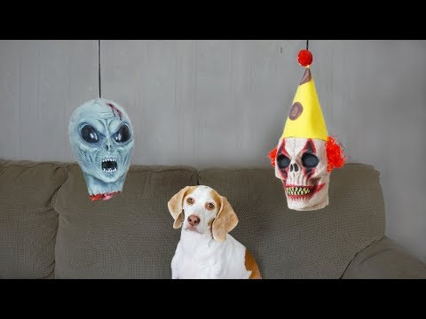 Dog vs. Severed Heads: Funny Dog Maymo