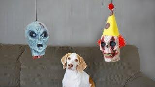 Dog vs. Severed Heads: Funny Dog Maymo
