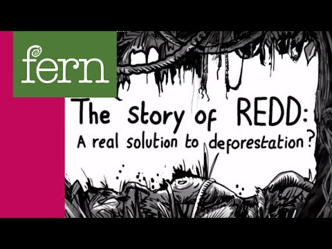 """The Story of REDD: A real solution to deforestation?"""