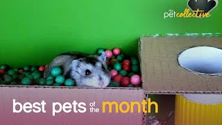 Best Pets of the Month (January 2021) | The Pet Collective