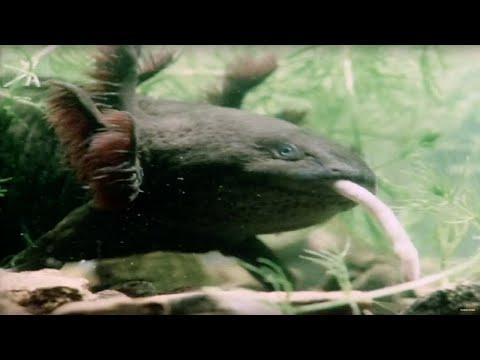 Top 10 WEIRDEST Animals You've NEVER Seen!   Earth ...