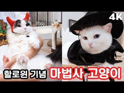 대마법사 꼬부기와 쪼렙법사 쵸비! 😍 할로윈 기념 고양이 코스튬