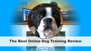 Online Dog Trainer Review | Best Dog Training Courses Online