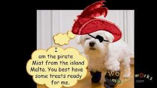 Woof: Miat The Pirate From Malta!