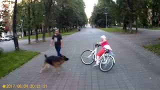 Солнышко VS Немецкая овчарка....