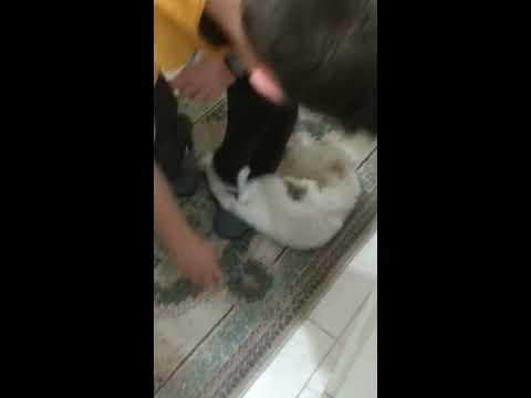 Как Успакоить Кошку При Течке