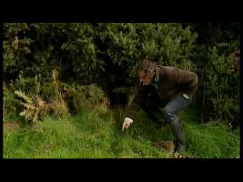 River Cottage | Hugh Fearnley-Whittingstall | Rabbits!